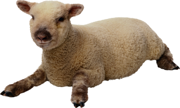 sheep_PNG2720.png